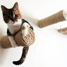 Let your kitty enjoy their play times by giving them this Floating Sisal Cat Shelf Post. These can be considered as bracket-less sisal posts which can be Devon, Modern Cat Furniture, Midcentury Cat Furniture, Cheap Furniture, Cat Shelves, Cat Room, Scratching Post, Cat Wall, Diy Stuffed Animals