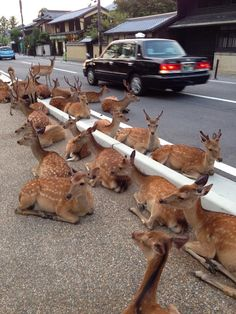 Meanwhile in Nara, Japan . . .