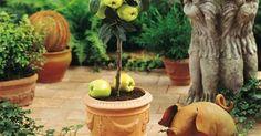 Aunque vivamos en apartamentos o espacios pequeños tener la posibilidad de plantar algún árbol frutal: nos darán algo de fruta, oxigeno y un toque natural en el hogar.