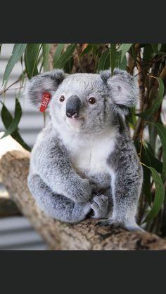 Cat Wallpaper, All Things Cute, My Spirit Animal, Cute Funny Animals, Amphibians, Sloth, Koala Bears, Animals Beautiful, Lions