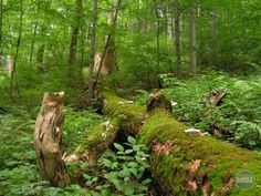 Stužický prales - NP Poloniny Heritage Site, Garden Bridge, Flora, Outdoor Structures, City, Plants, Cities, Plant, Planets