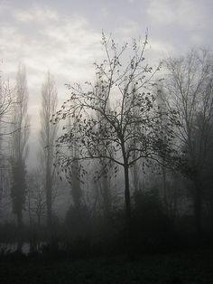 Serenity by zenera, via Flickr