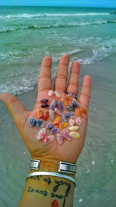 We used to find these in Florida all the time. Shell Beach, Ocean Beach, Glass Beach, Easy Landscape Paintings, St Pete Beach, Sea Glass Crafts, Summer Backgrounds, Seashell Art, Sanibel Island