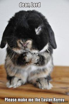 GAH. So cute. Bunny prayers.