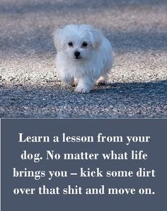 Learn a lesson from your dog. No matter what life brings you – kick some dirt over that shit and move on. Check out 42 other dog sayings. All Dogs, I Love Dogs, Best Dogs, Cute Dogs, Dogs 101, Awesome Dogs, Maltese Dogs, Teacup Maltese, Dog Rules