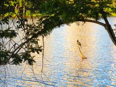 Lago Igapó  -Londrina - PR