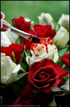 Painting the White Roses Red