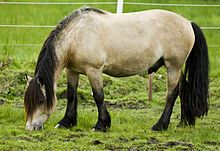 The Dole Gudbrandsdal, Dølahest or Dole is a draft- and harness-type horse from Norway. The Dole Trotter is alternately considered a subtype of the Dole Gudbrandsdal[1][2][3] and a separate breed;[4][5] it is also considered a part of the Coldblood trotter type. The Dole Gudbrandsdal is a small draft horse, known for its pulling power and agility, while the Dole Trotter is a smaller, faster horse used for harness racing; the two types are commonly interbred.