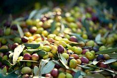 """Dieses #Olivenöl gehört zu den besten griechischen Produkten im Norden des Landes. Das hochwertige naturtrübe, extra native #Olivenöl aus ökologischem Anbau wird aus der alten Olivensorte """"Valanolia"""" gewonnen. Zu kaufen bei http://www.gutesvonkreta.de"""