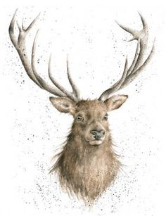 Portrait Of A Stag Ltd Mounted Print Wrendale Designs Uk - This Beautiful Portrait Of A Handsome Stag Is Printed On Acid Free Paper To Retain The Beautiful Colours And Is Part Of Limited Run Of Signed By Hannah And Is Supplied With A Certificate Of Authe Watercolor Clipart, Watercolor Animals, Watercolor Art, Watercolour Paintings, Art And Illustration, Illustrations, Stag Tattoo, Different Forms Of Art, Wrendale Designs