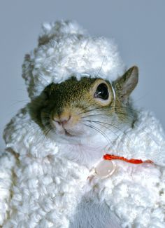 I purchased this coat and hat online. You did not  know we squirrels knew how to use the internet did you? Some of us even own laptops.