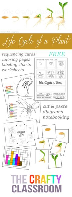 FREE Plant Life Cycle Worksheets Pack