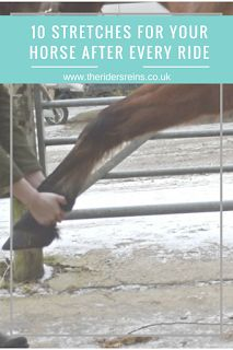 10 Stretches for Your Horse After Every Ride - The Rider's Reins Horse Care Tips | Barn hacks | Barn ideas | Stable hacks | Stable ideas | Equestrian clothing | Horse riding tips | Equestrian bloggers | Horse bloggers | Horse care | stable ideas | Riding tips | horse care tips | stable plans | stable hacks | equestrian fashion | barn hacks | barn ideas | barn plans | pole work | show jumping | horse products | horse tack |