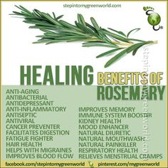Rosemary health benefits. Burning rosemary consecrates sacred space.