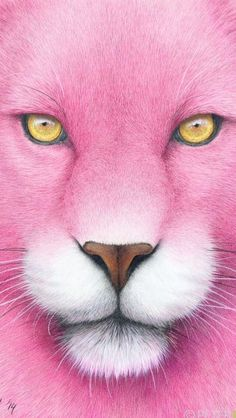 Risultati immagini per pink panther saxophone Fuchsia, Pink Purple, Pink And Green, Pink Cat, Pink Leopard, Pink Black, Hot Pink, Rosa Panther, Doja Cat