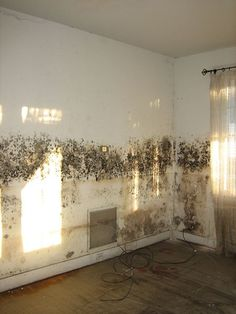 If your walls at home have this type of damp, did you know that it releases spores into the room which you will breathe in, and are worse for you than smoking! Visit our damp proofing page to learn more about how NEVER PAINT AGAIN clear coating can cure damp, mould and mildew, with a 15 year guarantee.