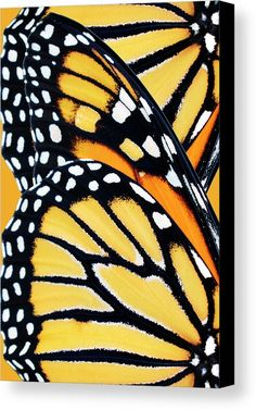 Monarch Butterfly Abstract Pattern Acrylic Print by Christina Rollo. All acrylic prints are professionally printed, packaged, and shipped within 3 - 4 business days and delivered ready-to-hang on your wall. Choose from multiple sizes and mounting options. Butterfly Drawing, Butterfly Painting, Monarch Butterfly, Butterfly Wings, Butterfly Wing Pattern, Abstract Pattern, Pattern Art, Canvas Art, Canvas Prints