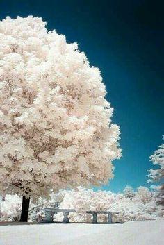 A Winter Tree