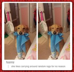 Happy Dog Carrying Rags. | LOL, Damn!-Spread Laughter And Awesomeness!