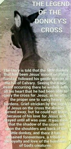 ~~ A Beautiful Tribute to our Lord and Saviour Jesus Christ for His completely selfless death in order to free mankind from sins death sentence. So Awe-Inspiring! Mini Donkey, The Donkey, Farm Animals, Cute Animals, Wild Animals, Miniature Donkey, Pomes, Horse Quotes, Beautiful Stories