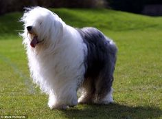 amazing looking dogs - Google Search