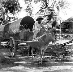 Filipino bovine pulled cart, Philippines, early 20th Century   by J. Tewell Old Photos, Vintage Photos, Filipiniana, Fantasy Setting, African Diaspora, Fantasy Rpg, Pinoy, Filipino, Cart