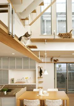 cats in a cat-friendly architecture - I must have this house