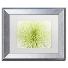 """Trademark Art Lime Light Spider Mum by Cora Niele Framed Photographic Print Size: 11"""" H x 14"""" W x 0.5"""" D, Frame Color: Brown"""