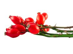 Herb & Hedgerow Rosehips
