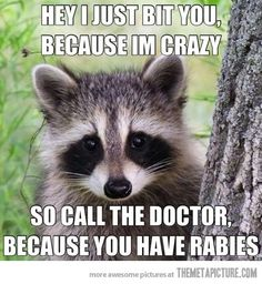 Hey, I just bit you…  Okay, okay, I'm not laughing over rabies - just how they put the words to the tune Call Me Maybe!