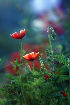bloom by AMITABH KUMAR on 500px