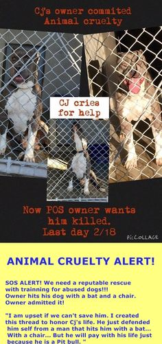"(( SUPER URGENT )) ""C.J."" - ID ‪#‎A478451‬. Must exit 2/18/15 *RESCUE ONLY*  -CJ lived in a home w/ kids....he was fine. He's a victim of an abusive ower. HE ATTACKED OWNER BECAUSE OWNER HAD A CHAIR TO HURT HIM. MAN ADMITTED HAS BEEN HITTING HIM WITH A BAT. PLS HELP SAVE THIS POOR BABY! San Bernardino Shelter. CA 909-384-1304 https://www.facebook.com/649241055113967/photos/a.754881631216575.1073741838.649241055113967/873525969352140/?type=1"