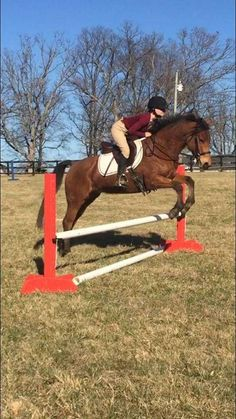 Super Sweet and Athletic Sport Pony Ponies For Sale, 7 Year Olds, Pony, Horses, Athletic, Sweet, Sports, Pony Horse, Candy