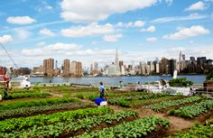 Eagle Street Rooftop Farm, delivers crops to NYC markets and restaurants by bicycle.