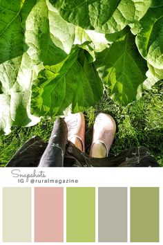 Rhubarb leaves and pink garden clogs, from Rural magazine Instagram feed with color palette.