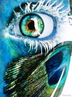 blue eye peacock's paradeyes by ftourini.deviantart.com on @deviantART
