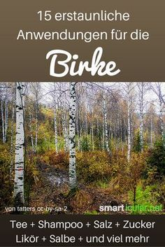 Die Knospen und Blätter der Birke sprießen früh sie können verblüffend vielseitig und nützlich verwendet werden. Diese Anwendungen sind einfach genial.