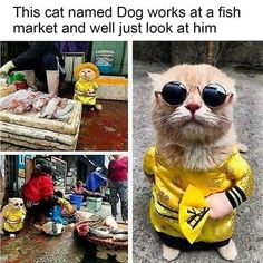 Crazy Funny Memes, Really Funny Memes, Funny Relatable Memes, Haha Funny, Funny Cute, Hilarious Memes, Fuuny Memes, Stupid Memes, Cute Animal Memes
