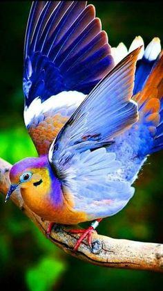 Publication de Birds world Beauty of Nature