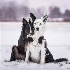 Rescued Border Collie Best Friends Love Giving Each Other Hugs (PHOTOS)