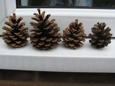 Predict the weather with this pine cone weather station #Weather #Scienceforkids