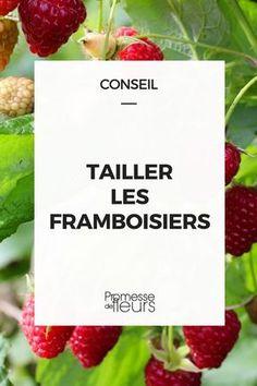 Quand et comment tailler les framboisiers ? Suivez nos conseils ! #jardin #jardinage