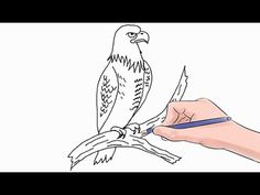 How to Draw a Bald Eagle - YouTube