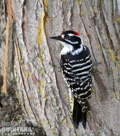 Bird photography article http://www.mnn.com/earth-matters/animals/stories/how-to-take-great-bird-photos-in-your-backyard