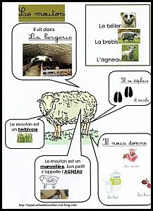 Fiche d'identité le mouton Vocabulary Activities, Science Activities, Classroom Activities, French Classroom, Animal Habitats, Montessori Materials, Farm Theme, Animal Projects, Elementary Science