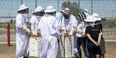 Bees Are Slowly Going Extinct. These Prisoners Are Trying To Stop That.   The Huffington Post