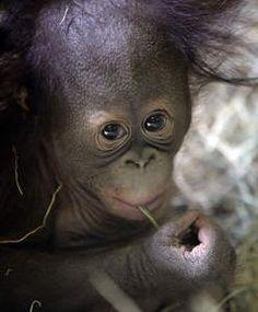 Het schattigste dier van de dag - HLN.be