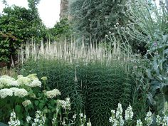 White garden, Sissinghurst