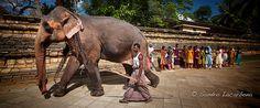 Elephant near the temple of the sacred tooth relic, Kandy, Sri Lanka Tour Operator, Kandi, Maldives, Sri Lanka, Tooth, Traveling By Yourself, Temple, Elephant, Holiday