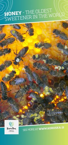 Beekeeping is strongly represented in Koroška. Among the most common species of bees are the Domestic and Carniolan honeybee, that alongside honey, provide us with propolis, royal jelly and vax. Royal Jelly, Beekeeping, Bees, Old Things, Honey, World, Movie Posters, Film Poster, The World